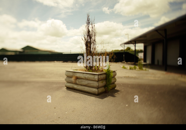Carpark with tree in planter - Stock Image