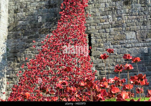 Low angle of Weeping Window art sculpture of ceramic red poppies display in Caernarfon castle walls. Caernarfon - Stock Image