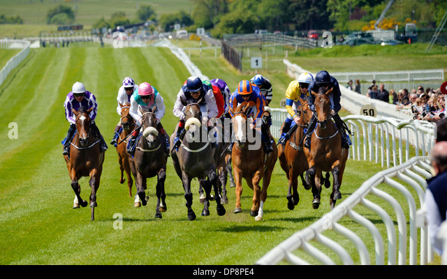 Horse Racing at The Curragh Co. Kildare Ireland - Stock Image