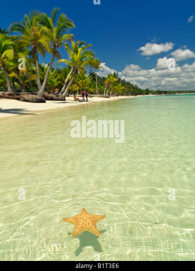 Dominican Republic Punta Cana Bavaro Beach,starfish floating on placid water with blue sky and palm fringed beach - Stock Image