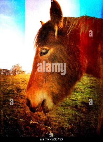 Side view of a horse - Stock Image