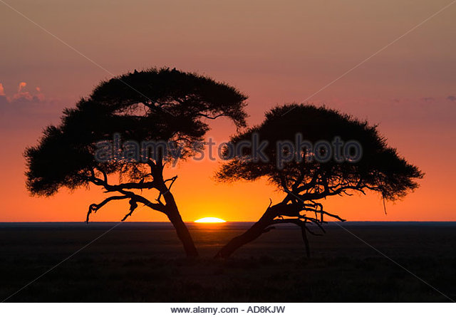 African sunrise with acacia trees in silhouette. Etosha National Park, Namibia, Africa - Stock-Bilder
