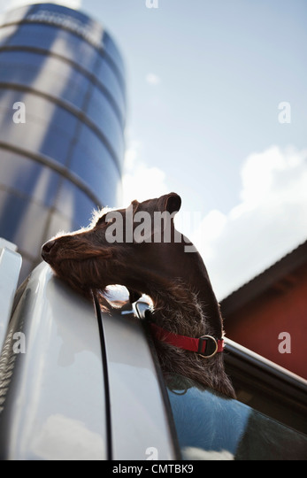 Low angle view of dog looking out - Stock Image