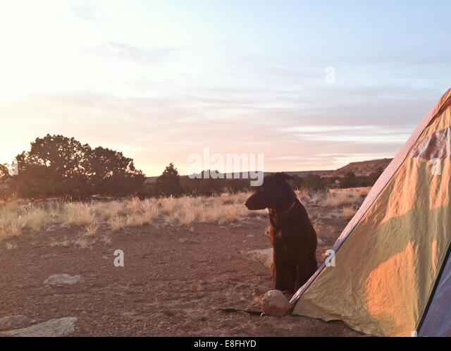 Dog  sitting outside tent - Stock Image