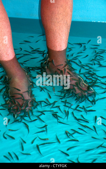 Cyprinion stock photos cyprinion stock images alamy for Fish pedicure near me