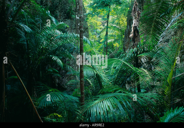 tropical rainforest Khao Sok Thailand - Stock-Bilder