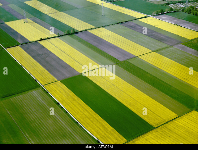 corn fields and rape fields, Germany, Bavaria, Unterfoehring - Stock Image