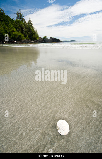 A Sand Dollar on the beach at Vargas Island in Clayoquot Sound near Tofino, British Columbia, Canada. - Stock-Bilder