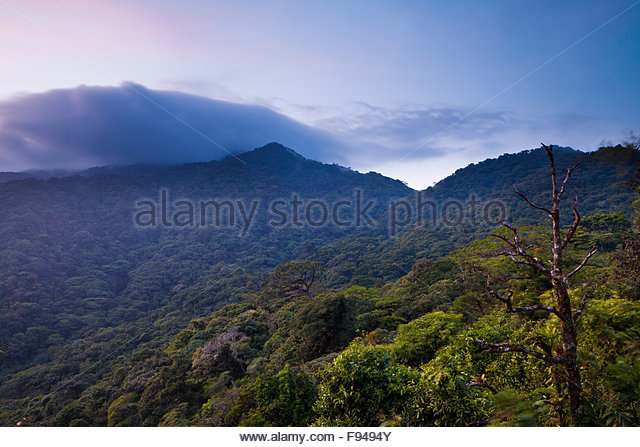 Evening in Omar Torrijos national park, Cocle province, Republic of Panama. - Stock-Bilder