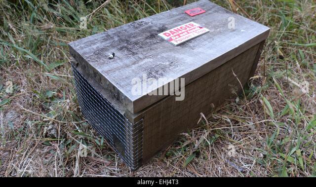 how to set a predator rat trap