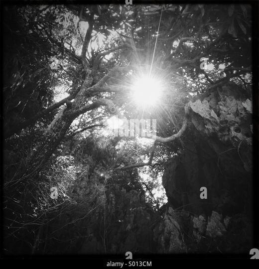 Sun peeking through trees in the jungle in Thailand - Stock-Bilder
