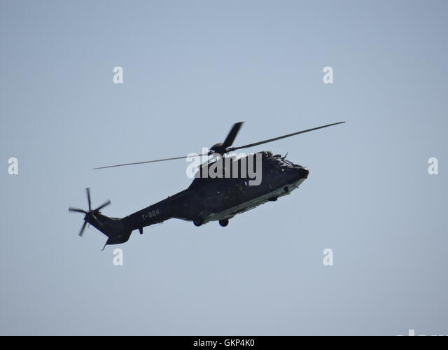 Uk Puma Stock Photos Amp Uk Puma Stock Images  Alamy