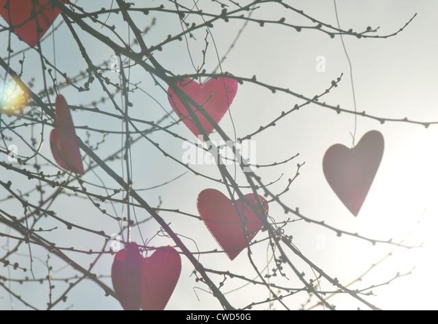 twig,heart,baubles - Stock-Bilder