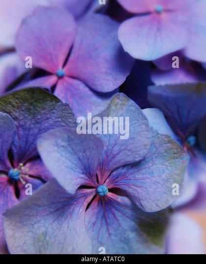 petal - Stock Image