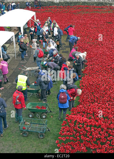 Volunteers dismantling Blood Swept Lands and Seas of Red poppies, at The Tower of London, England UK - Stock Image