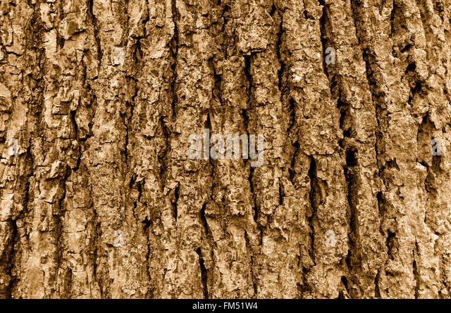 Close up of coarse tree bark in sepia tone - Stock Image