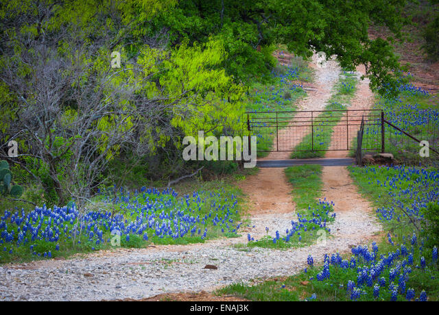 Small gravel road lines with bluebonnets, near Willow City in the Texas Hill Country - Stock-Bilder