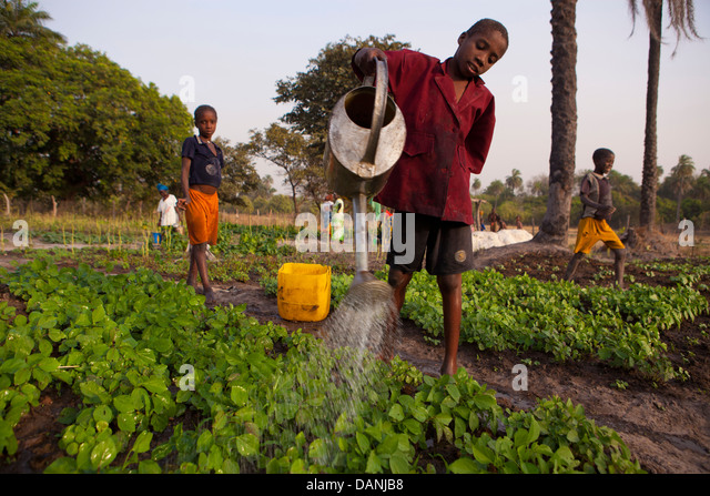 Irrigation in South Senegal. - Stock Image