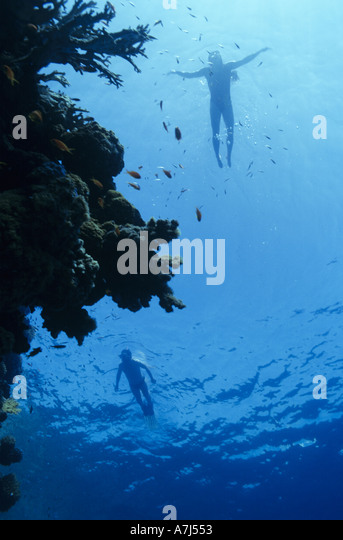 snorkerling on coral reef - Stock Image