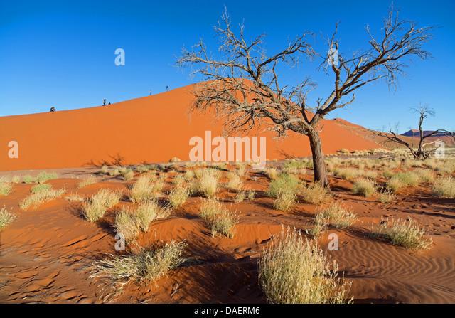 Namib desert in Namibia, Namibia, Namib Naukluft National Park, Sossusvlei - Stock Image