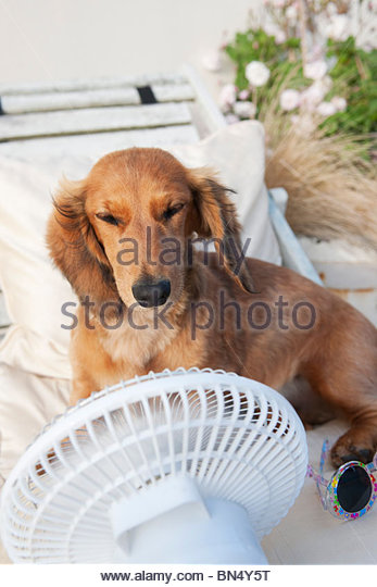 how to keep puppy cool in hot weather