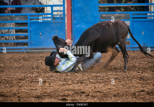 Rodeo at the the philomath frolic amp rodeo oregon usa stock image