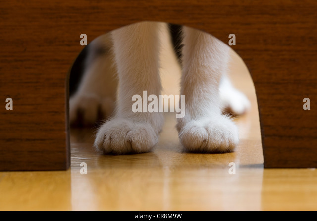 Cats paws and mouse hole - Stock Image