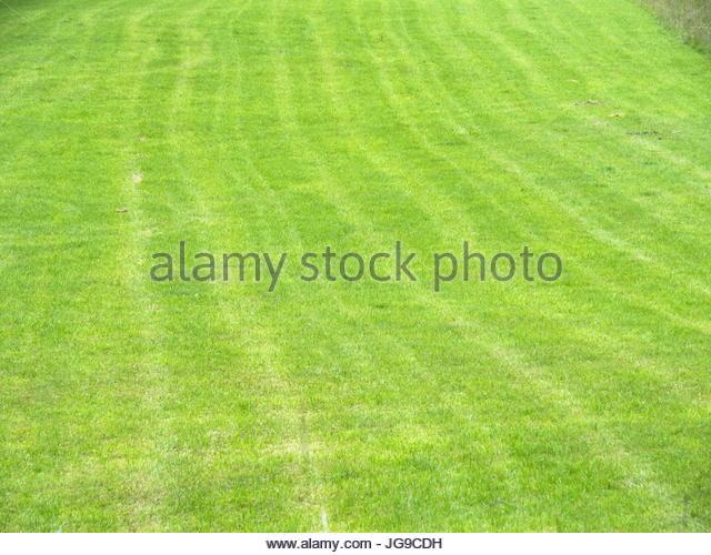 Hintergrund: Grüne Wiese - Stock Image