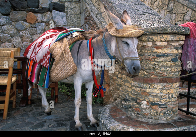 Dominican Republic Altos de Chavon Casa de Campo outdoor cafe donkey dressed up - Stock Image