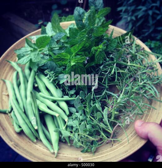 Homegrown garden vegetables and herbs - Stock Image