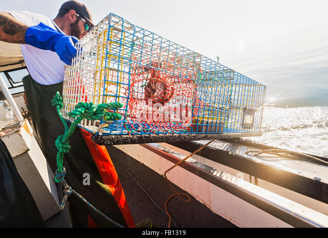 Fisherman throwing lobster trap - Stock Image