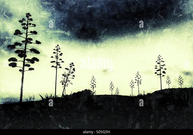 Conceptual landscape of American Agave trees against a stormy sky at Dwejra, Gozo - Stock Image