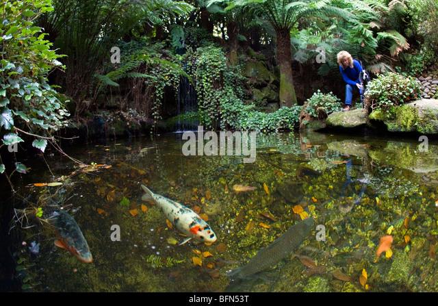 Garden visitor stock photos garden visitor stock images for Koi show pools