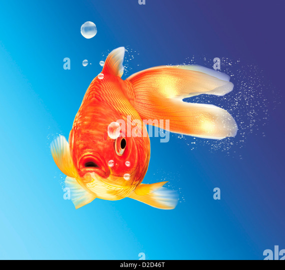 Goldfish computer artwork - Stock Image