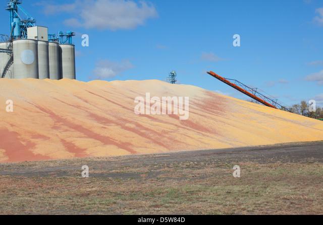grain pile overflow - Stock Image