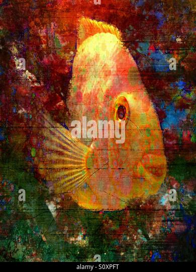 Painterly portrait of a Fish - Stock Image
