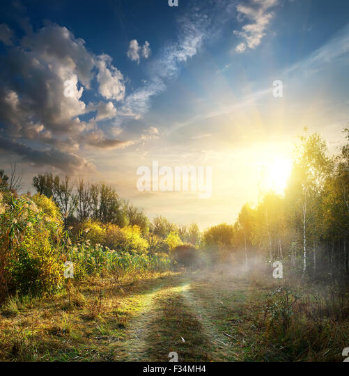 Fog in autumn wood at the sunrise - Stock Image