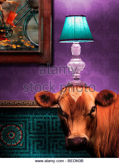 Cow in living room with lamp on head - Stock Image