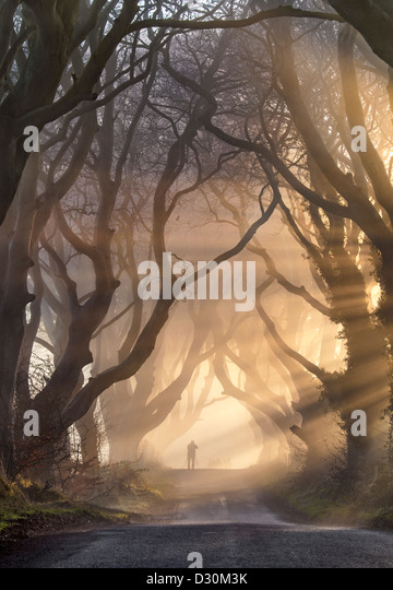 Silhouette figures under the Dark Hedges in Northern Ireland.. - Stock-Bilder
