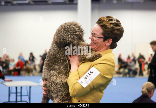 Toronto Biggest Dog Show Competition