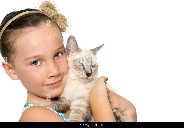 child holding cat stock photos   child holding cat stock cat on sale for cheap cat on sofa hits cat below