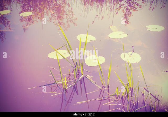 Vintage filtered nature background, water lilies in lake. - Stock Image