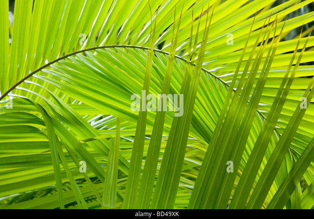 Palm frond details ideal for a jungle background - Stock-Bilder