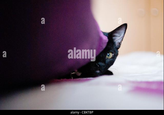 Black Kitten at Home - Stock Image
