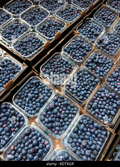 Blueberries - a small sweet blue-black edible berry. - Stock Image