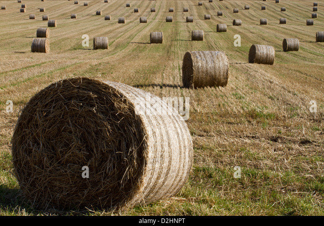 Hay bales - Stock Image