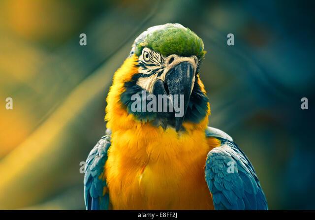 Close up of parrot - Stock-Bilder
