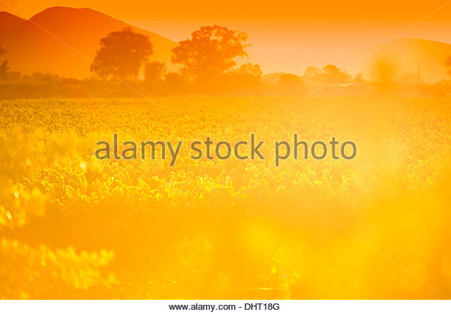 South African Sunset - Stock Image