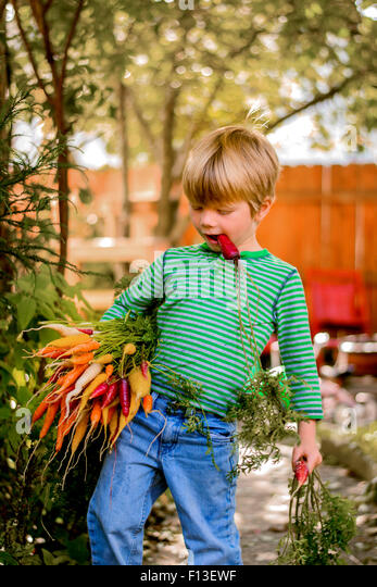 Boy carrying a bunch of freshly picked carrots - Stock Image