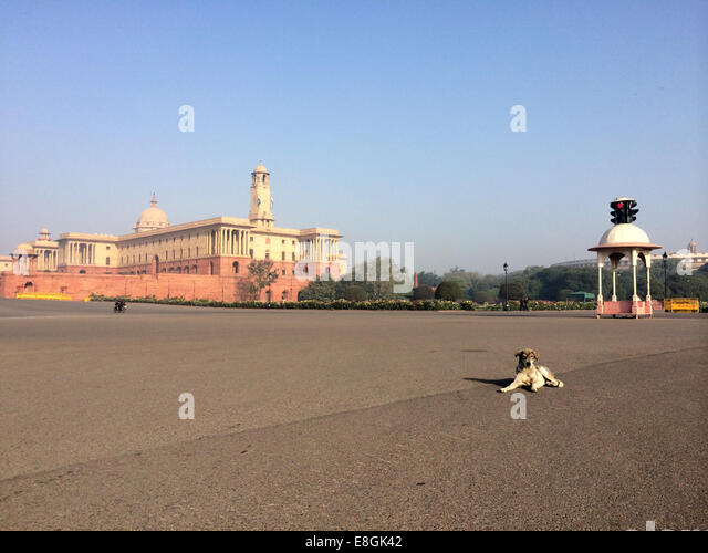 India, New Delhi, Vijay Chowk, A stray dog sitting in the middle of road - Stock Image